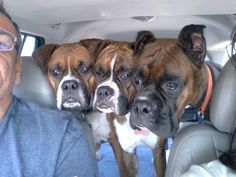 Back seat drivers...