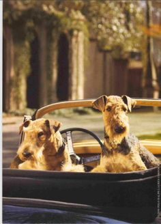 ralph lauren ad - dulce and bounce Re pinned by me as a tribute to the terriers we always loved