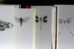 Insect Sketch Books