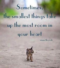 The smallest things.....