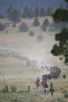 Aspen Ridge Resort: Family friendly dude ranch where you actually help move the herd and tend to the cattle!