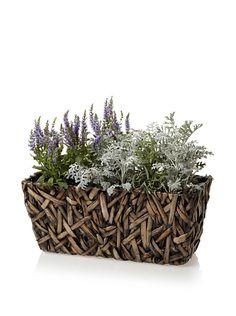 Wald Imports Small Rectangular Random Weave Seagrass Planter, http://www.myhabit.com/redirect?url=http%3A%2F%2Fwww.myhabit.com%2F%3F%23page%3Dd%26dept%3Dhome%26sale%3DA1RCBEG66RJKCS%26asin%3DB00812FO8C%26cAsin%3DB00812FOEG
