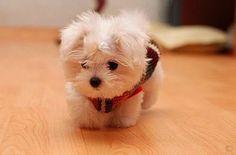OMG is that a stuffed animal! He is SO cute!