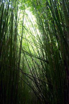 Hiking through the Kipahulu bamboo forest along the road to Hana, Maui