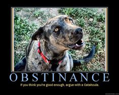 CATAHOULA LOVE!!!