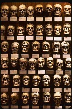 Mutter Museum skulls-