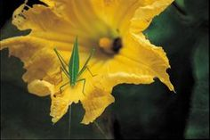 Top Five Ways to Control Squash Bugs
