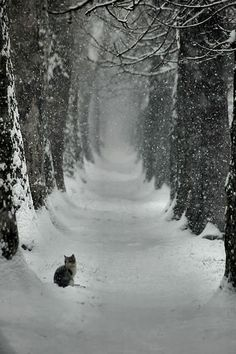 Snowy path, alone cat