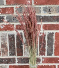 Dried Ruby Red Silk Grass is really, really pretty.  From drieddecor.com
