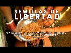 """SEMILLAS DE LIBERTAD"""