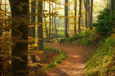 woodland walk, balls, winter, british, green, children, trees, earth, trail running