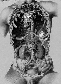 vintage medical illustration
