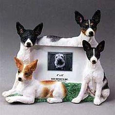 Picture frame terrier rule, terrier rock, terrier pictur, ratti girl, rat terriers