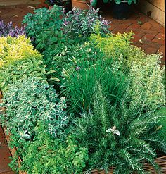 herbs in a basket....