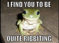 BAHAHAHHA why do I find this so funny? #frogs #funny #humour funny animals, happi frog, funny animal pics, animal funnies, funny animal pictures, funny pictures, funny cats, dog funnies, frogs