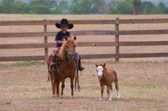 little horses and little boys