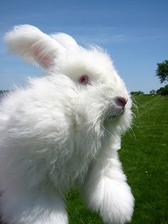 Wouldn't mind having a few angora bunnies also!