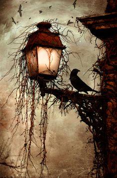 the Raven 彡