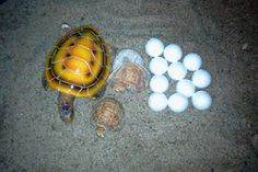 super duper fun and easy sensory tub/ learning station: Turtles In My Sandbox to go along with the book by Sylvan Dell