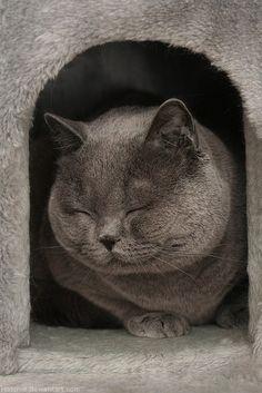 Fat Cat/ Happy Cat