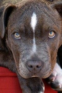 Anger Management: Are You a Pitbull or a Rottweiler?