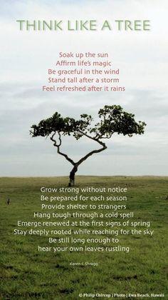 Think like a tree