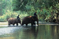 Elephant riding in Chaing Mai. Thailand