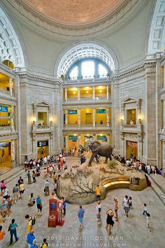 Main hall in Smithsonian Natural History Museum, Washington DC