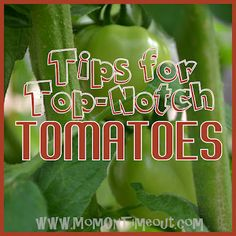 Tips for Top-Notch Tomatoes