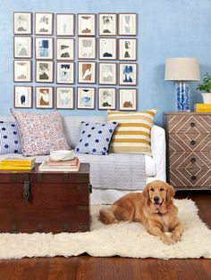 Dogs are an important part of our homes, so why overlook them when it comes to decorating?