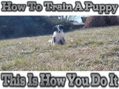 A program that works for all kinds of dog breeds