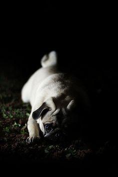 I <3 Pugs! :).