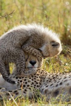 Cute cheetah mom with her baby.
