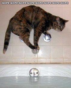 baths, cats, anim, laugh, nope