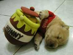 funny pets, real life, halloween costumes, puppy pictures, pet pictures, dog costumes, winnie the pooh, pet humor, funny puppies