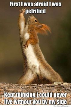 This song inspired the squirrel just as much as me