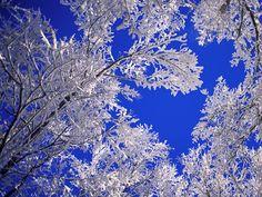 winter pictures, winter trees, florida, snow, winter wonderland, colorado, blue skies, winter scenes, blues