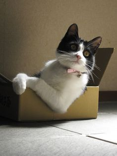Just chillin', in my box =]