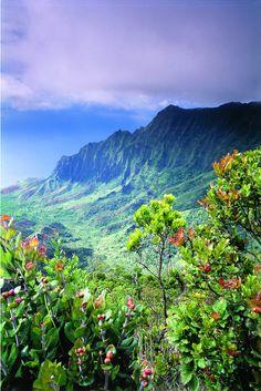 kauai, kalalau valley, state parks, flora, green, waimea canyon, blog, place, hawaii
