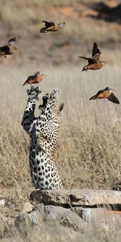 The never ending struggle between cats and birds