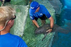 SeaWorld Orlando: Rescued manatee, now with newborn, returns home