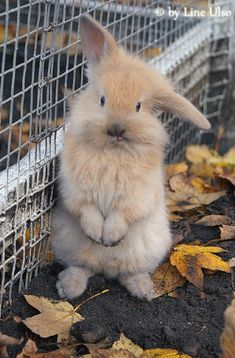 cute.. #rabits #rabit #bunny #hares #animals #topanimals