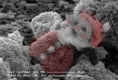 "Nano-Santa says ""Have a Merry Science-mas!"""
