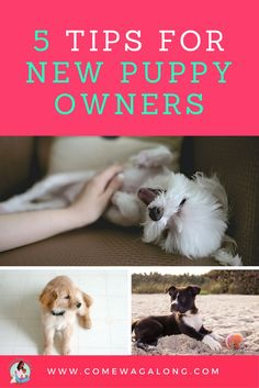 5 Tips for New Puppy