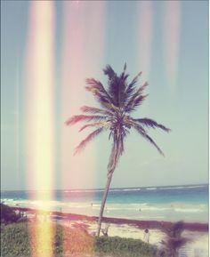 Palm tree   #splendidsummer