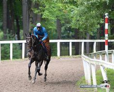 Zenyatta's first foal, the Bernardini colt Cozmic One, gallops at Saratoga.