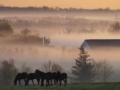 Horses in the Fog.