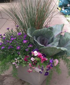 Fall Container Garden~♥ the large ornamental cabbage!