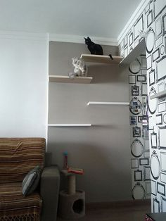 Shelves for cat exercise (also love the stylish wallpaper), by Ana Paula Cavagnoli
