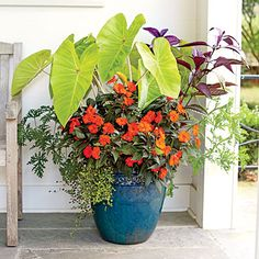 Add a Tropical Punch | Bringing the Tropics to your doorstep is a breeze with this combo: giant-leaved, sunny 'Maui Gold' elephant's ear; heavily blooming, fiery orange SunPatiens; velvety, fragrant citronella plant; purple iridescent Persian shield; and a heavenly skirt of angel vine spilling down the sides. | SouthernLiving.com plant, garden ideas, container gardening